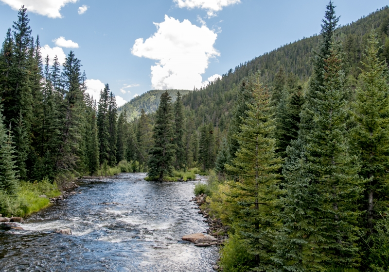 Pine Lined River in Colorado